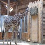 Riga Zoo Foto