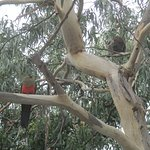 Kennett River - Kaola and Parrot