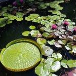 Foto de Botanical Garden University of Stellenbosch