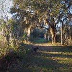 Sawgrass Island Preserve