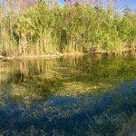 Captain Steve's Swamp Buggy Adventures Foto