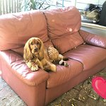 I.m so relaxed at must love dogs b&b