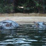 Foto di Tierpark