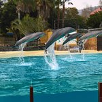 Delfinarium just 5 minutes walk from the hotel