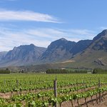 Vineyards with surrounding mountains