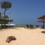 Pigeon Island Beach Resort Foto