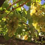 Foto de Posada Cavieres Wine Farm