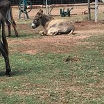 Photo of Eseltjiesrus Donkey Sanctuary