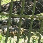 Photo of Cidade Park and mini zoo