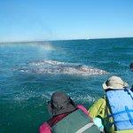 Foto de Baja Ecotours