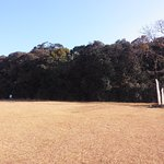 Mawphlang Sacred Grove: One of the oldest sacred groves in Meghalaya
