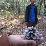 A pine cone that I picked up just for the purpose of a photograph
