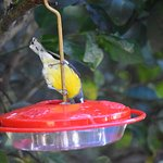 Watch sugar & humming birds while sipping your complimentary coffee