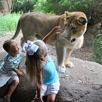 Get up close to lions, giant tortoises, flamingos, and the gaboon viper in the African Experienc