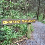 Kingfisher is the longest trail at Yankauer Preserve. It has beautiful views of the river!