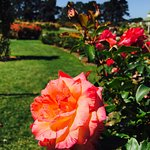 Photo of Victoria State Rose Garden