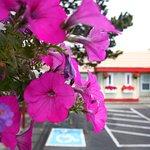 City Center Motel Photo