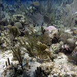 Lots of corals and fish