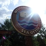 Sea Otter Area