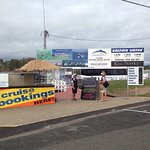 Amaroo Dolphin and Whale Watching Cruises