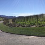 Rusack Vineyards Foto