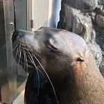 Photo of Toba Aquarium
