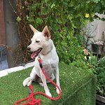 Great strawberry crepes, pet friendly and chicken puppachinos