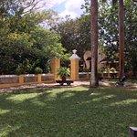 Garden surrounds patio