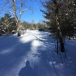 Excellent cross country ski trails