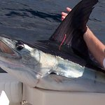 Picture of Marlin I caught in Cabo. The Westin set me up on the charter. They are awesome.