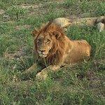 Foto de Cheetah Plains