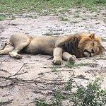 Photo de Cheetah Plains