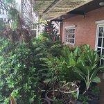 plants on the terrace, top floor
