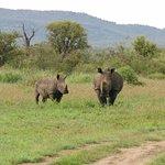 Foto de Motswiri Private Safari Lodge