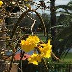 Mission Inn Resort & Club Foto