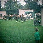 Actividades para chicos y grandes a caballo