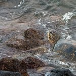 Foto de Kuhio Shores Condos