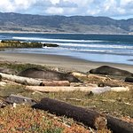 Great to place watch the Elephant Seals and Harbor Seals winter in Point Reyes National Seashore