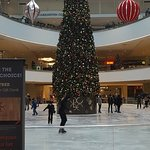 The massive Christmas tree around the newly renovated ice rink at Lloyd Center Mall.