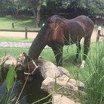 Blyde River Wilderness Lodge Foto