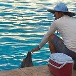 Alimentando a un delfin