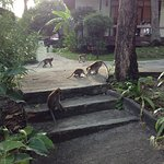 Monkeys coming down to the pool area. Bungalow style cabins.