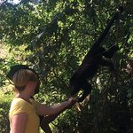 Feeding a howler monkey at the sanctuary