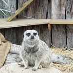 Фотография Brooklands Zoo