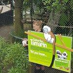 Brooklands Zoo Bild