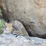 Hard to believe how our guide spotted this leopard sitting in a shadowed recess in a kopje
