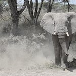 The elephant that feigned a charge at us