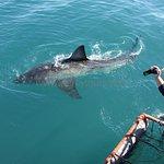 Great White Shark cage diving trip in Hermanus (Feb 2017)