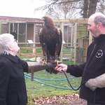Holding a Golden Eagle