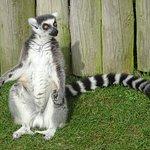 Lemur Walkthrough